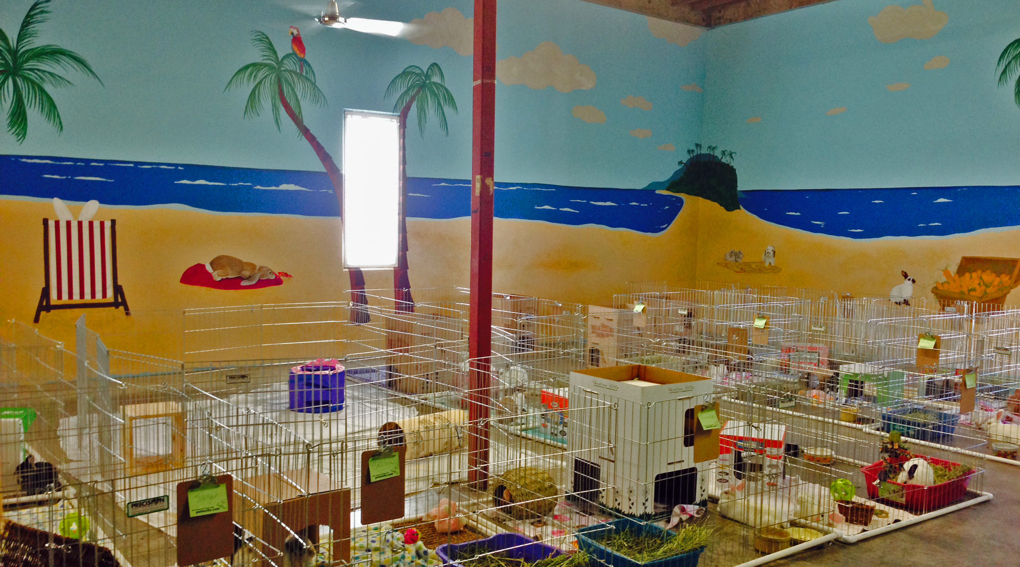 This New, State Of The Art Shelter For Rabbits Showcases Adoptable Rabbits  In A Homelike Setting And Educates The Public On How To Properly House And  Care