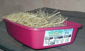 Set Ups : can rabbits be litter box trained - Aboutintivar.Com